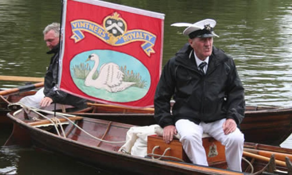 Image of man in a small boart Swan Upping on the Thames near Mouslford